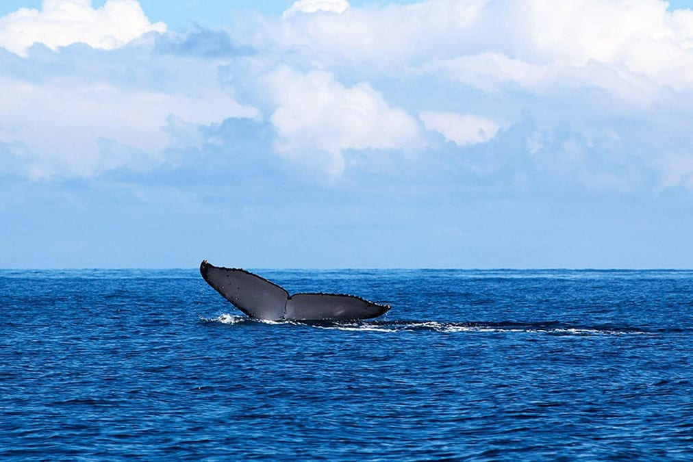 Panama whale watching