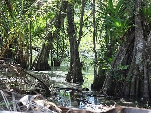 Mangrove swamp Cala Mia Resort, Panama