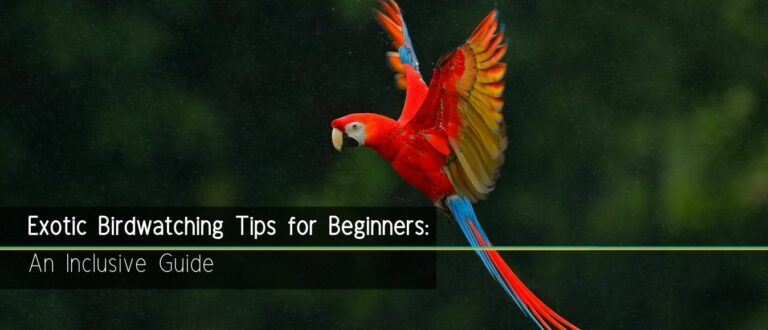 Exotic Birdwatching Tips for Beginners: An Inclusive Guide