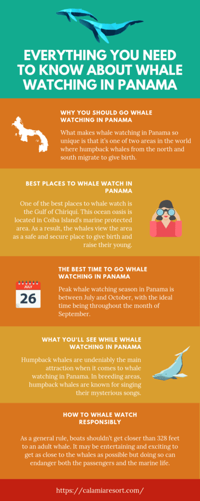 Everything You Need to Know About Whale Watching in Panama infographic