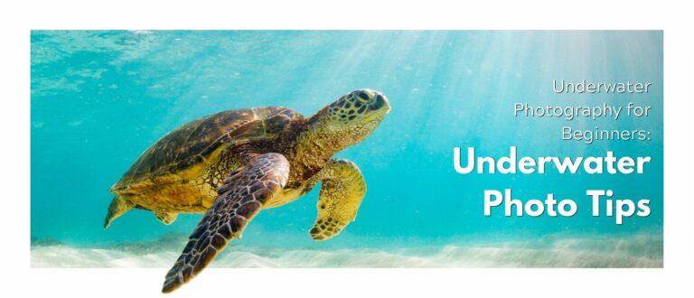 Underwater Photography for Beginners: Underwater Photo Tips