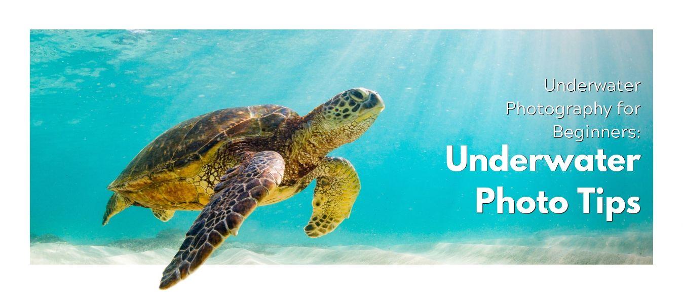 Underwater Photography for Beginners Underwater Photo Tips