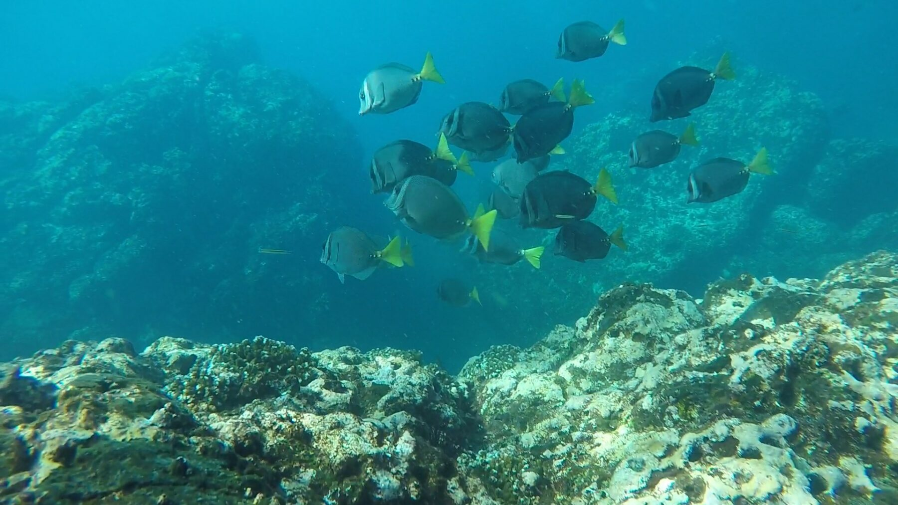 The Only NAUI Panama Diving Center is Cala Mia
