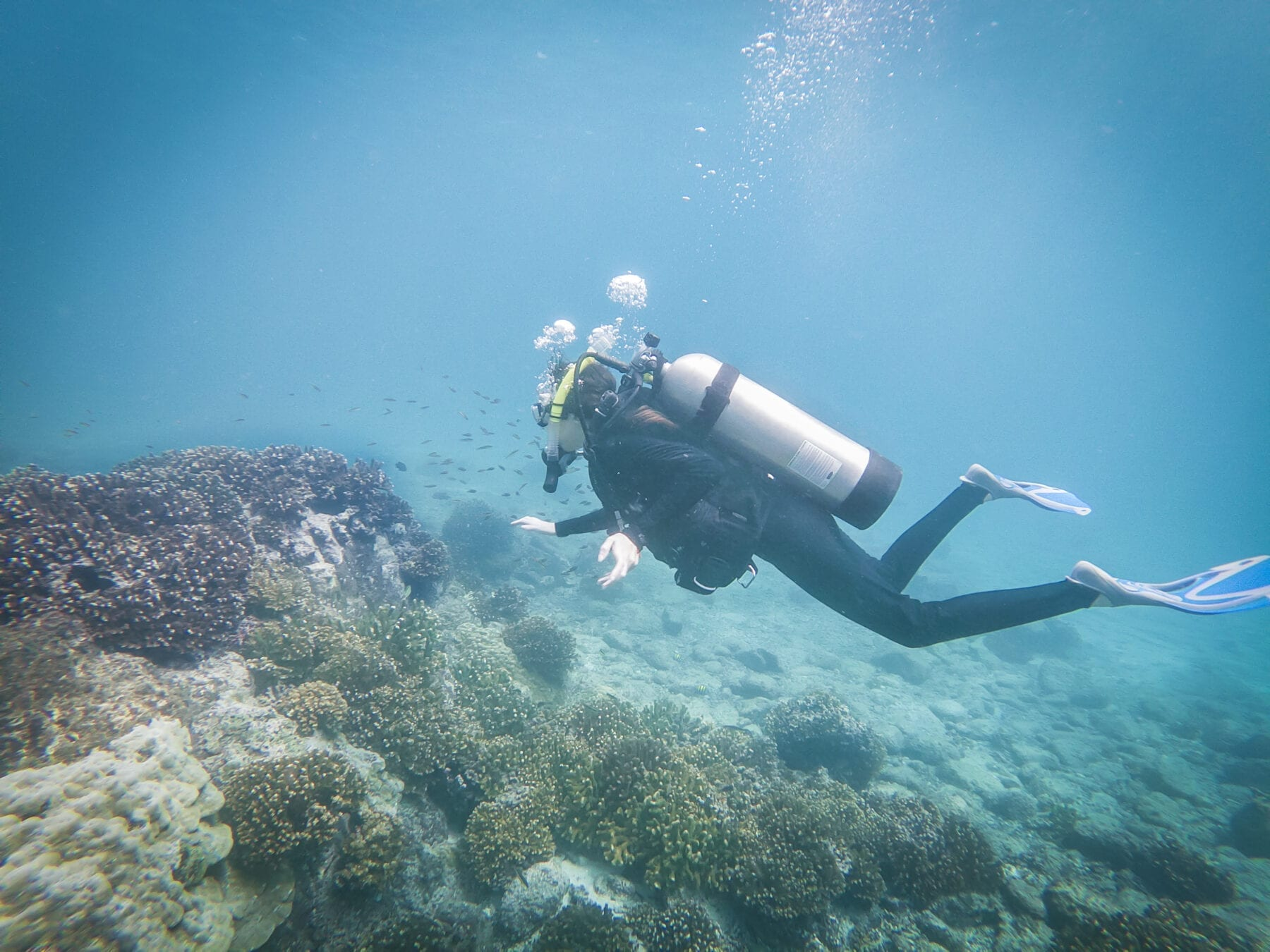 What Are the Best Places to Dive in Panama?