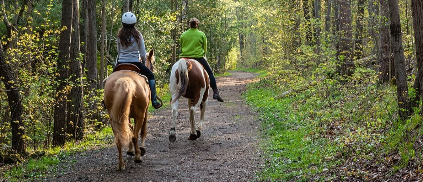 Why Everyone Should Go Horseback Riding Once