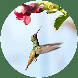 Bird watching Panama