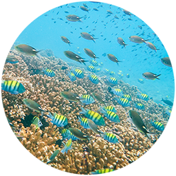 Panama All Inclusive Packages Diving