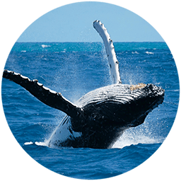 Panama whale watching