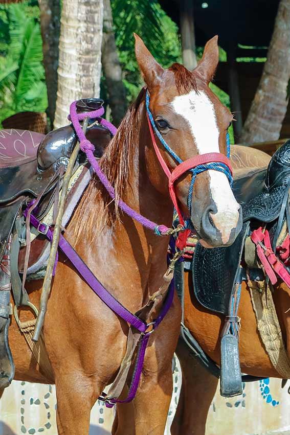 Jungle Horses in Panama