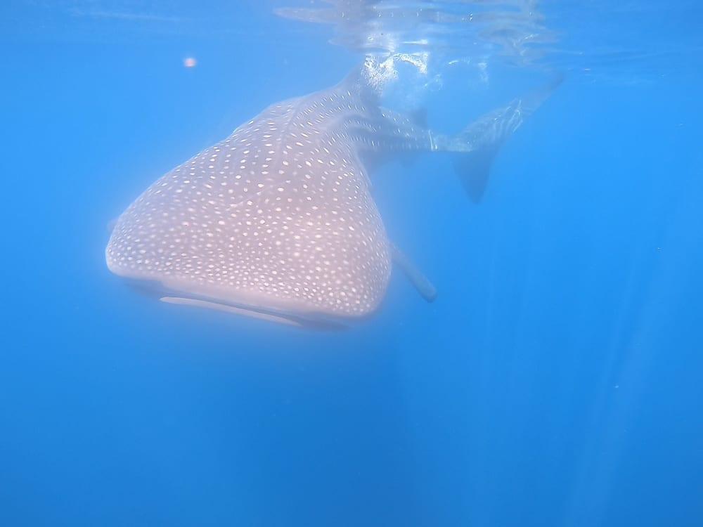 Panama Diving