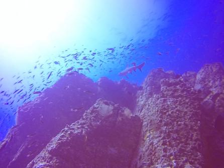 Isla Ladrones Diving