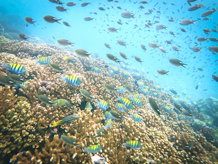 isla secas reef
