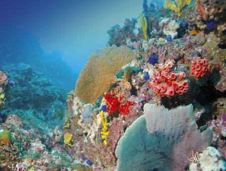 Coiba Coral Reefs