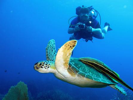 Panama adventure diving