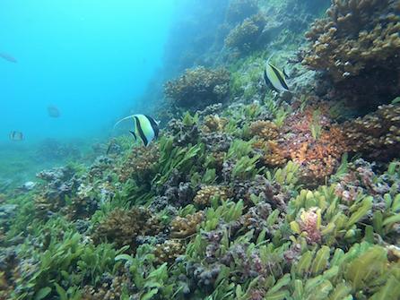 Scuba diving Panama Coibs