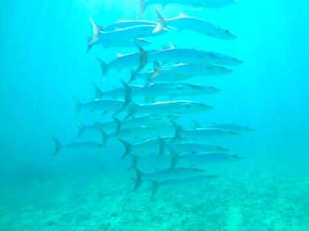 Panama scuba Diving Location