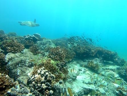 Scuba diving Panama