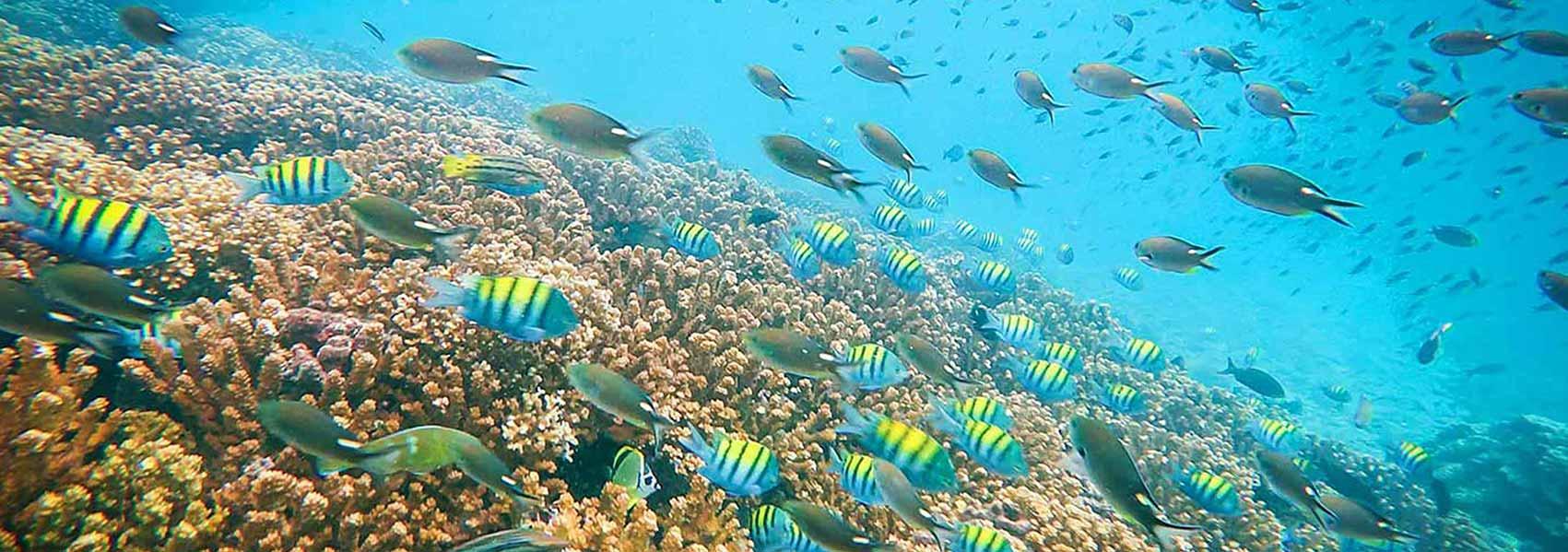 Cla_Mia_Homepage_slider_fishes3